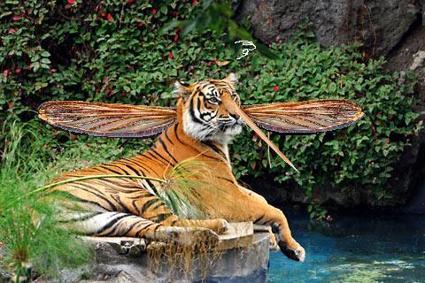 Conseil pratique pour eliminer les moustiques tres - Piege a moustique tigre ...